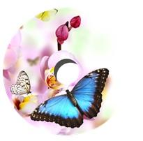 Flasque papillon pour fauteuil roulant